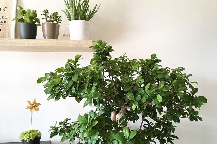 Voici une sélection de 10 jolies plantes dépolluantes pour l'intérieur, qui aident à purifier l'air de la maison grâce à la photosynthèse.