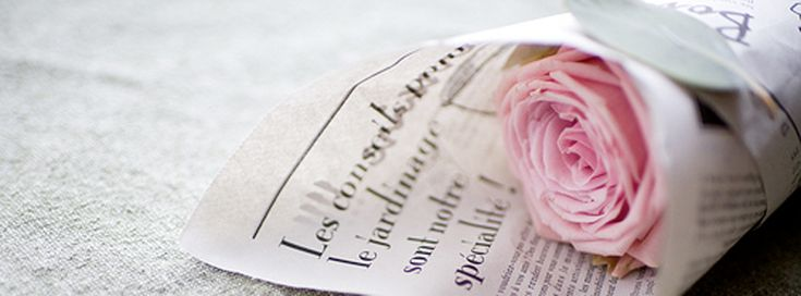 Pink Classic Rose Facebook Cover