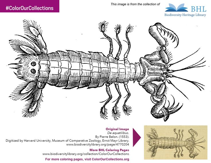 Get Free Printable Coloring Pages And Books From Libraries Archives Museums