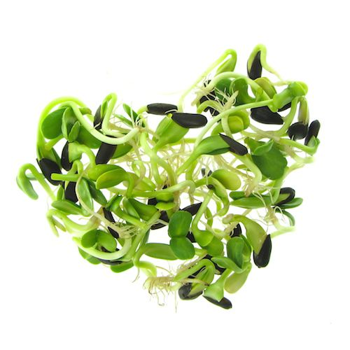 Sunflower sprouts mixed with empty hulls forming a green heart