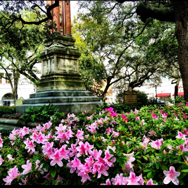 best Gardens Flowers and Greenery in Savannah images on Pinterest