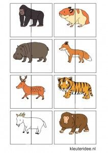 Dierenspel voor kleuters, kleuteridee.nl , animal match for preschool, free printable 3.