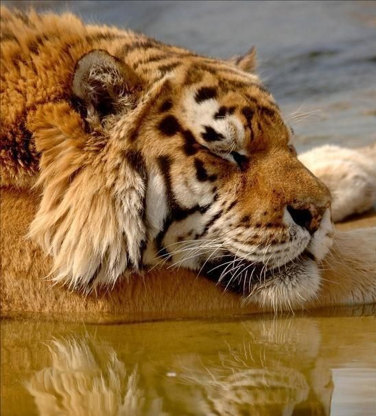 Before it's too late: What can be done to save wildlife?