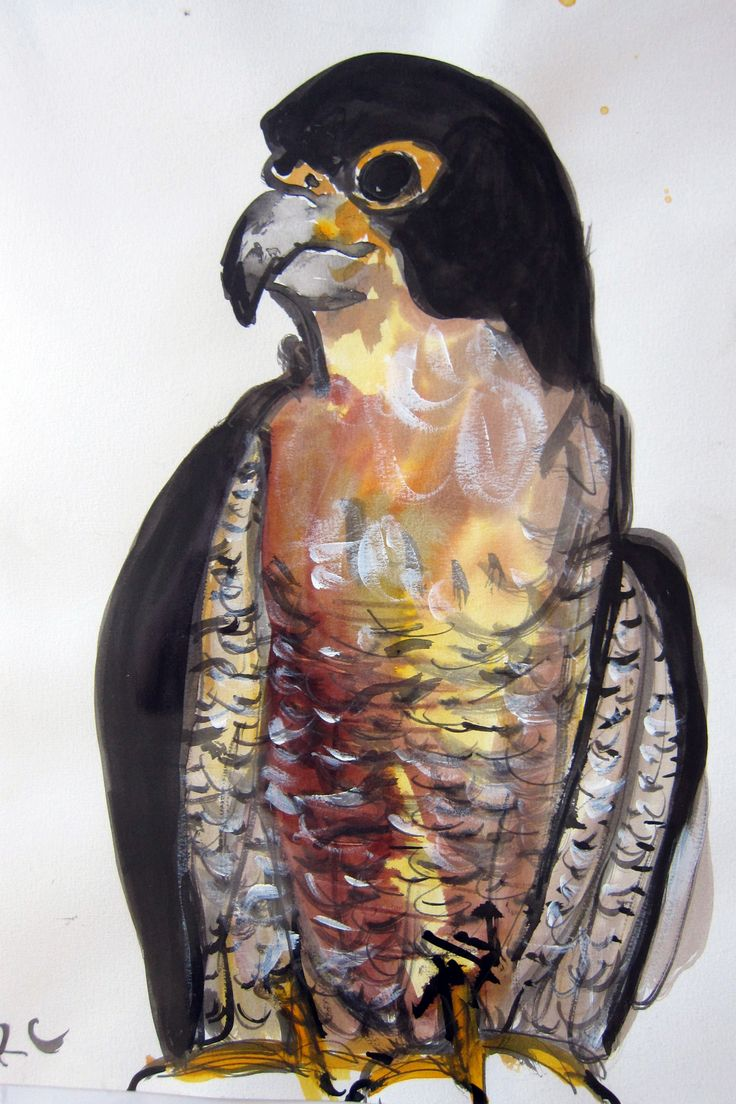 Falcon Fred Mixed media on paper $185 unframed Contact me to buy rachel@rachelcarroll.com.au