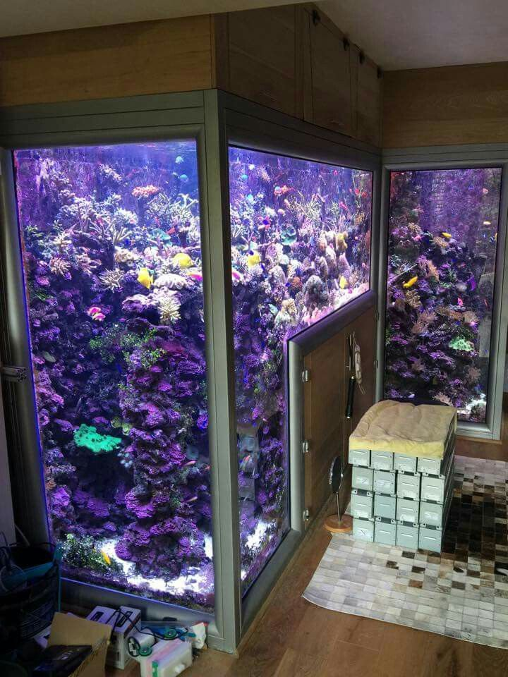 ... Aquarium no Pinterest  Aquarium Mural, Aquarium Décoration e Table