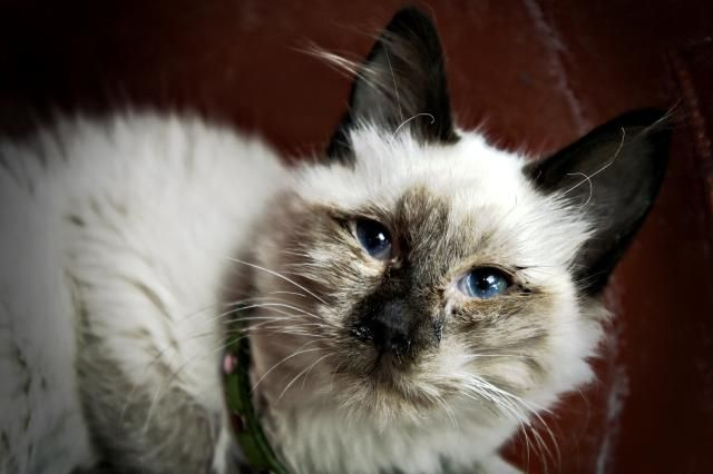 Cat Respiratory Infection Treatment Natural