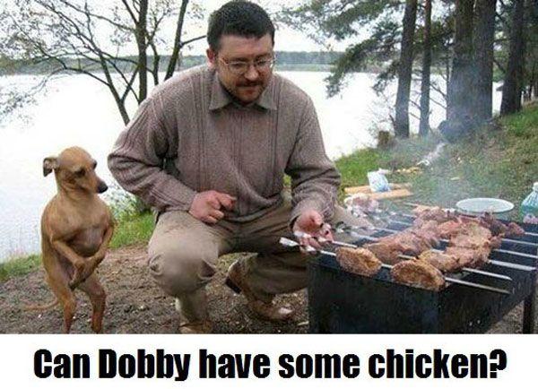 funny-dog-pics-603.jpg 600×434 pixels