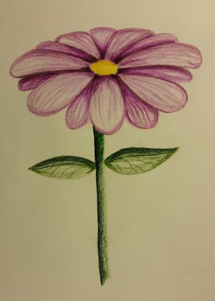 Flower - prismacolor pencils