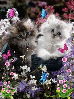 Gifs con gatitos tiernos para descargar gratis online.