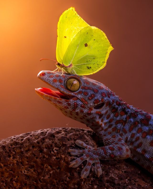 Reptiles and Amphibians Photo Contest Winners | ViewBug Blog | Bloglovin'