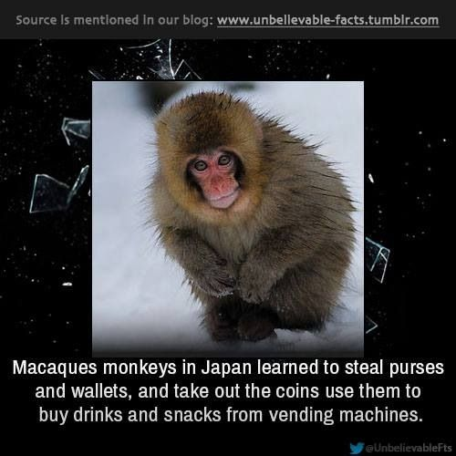Best The Lost Monkey Images On Pinterest Nature Architecture - Monkey knows how to operate vending machine