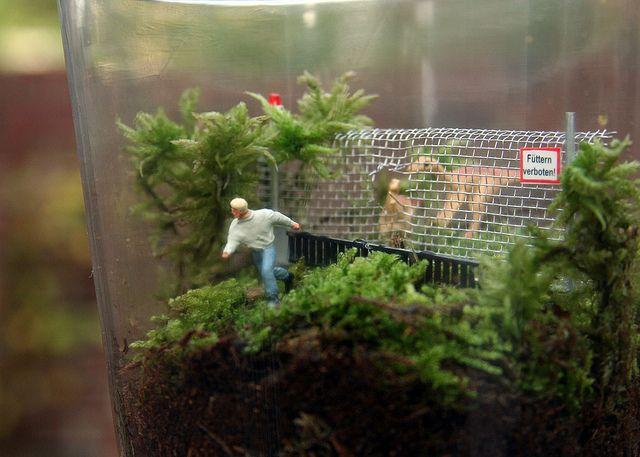 Twig Terrariums Raptor escape!