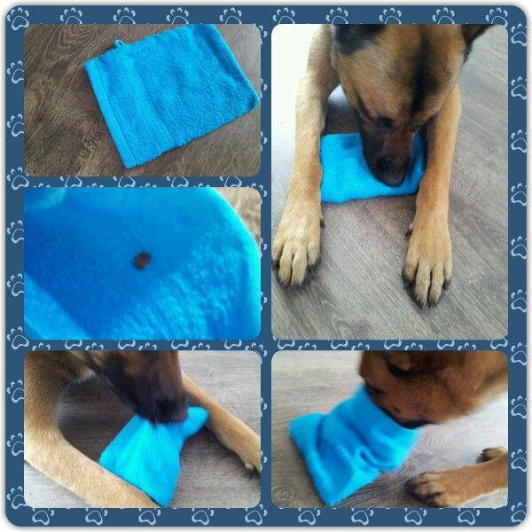 Spel 6 (hondenspel hond spel denkwerk hersenwerk brain dog game play diy) www.facebook.com/denkspellenvoorjehond