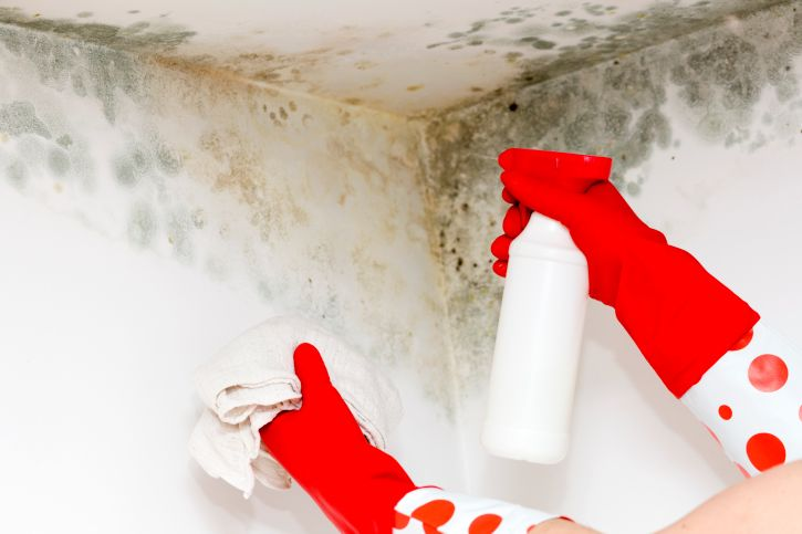 Is Mold in Your Home Putting Your Health at Risk? | Mold ...