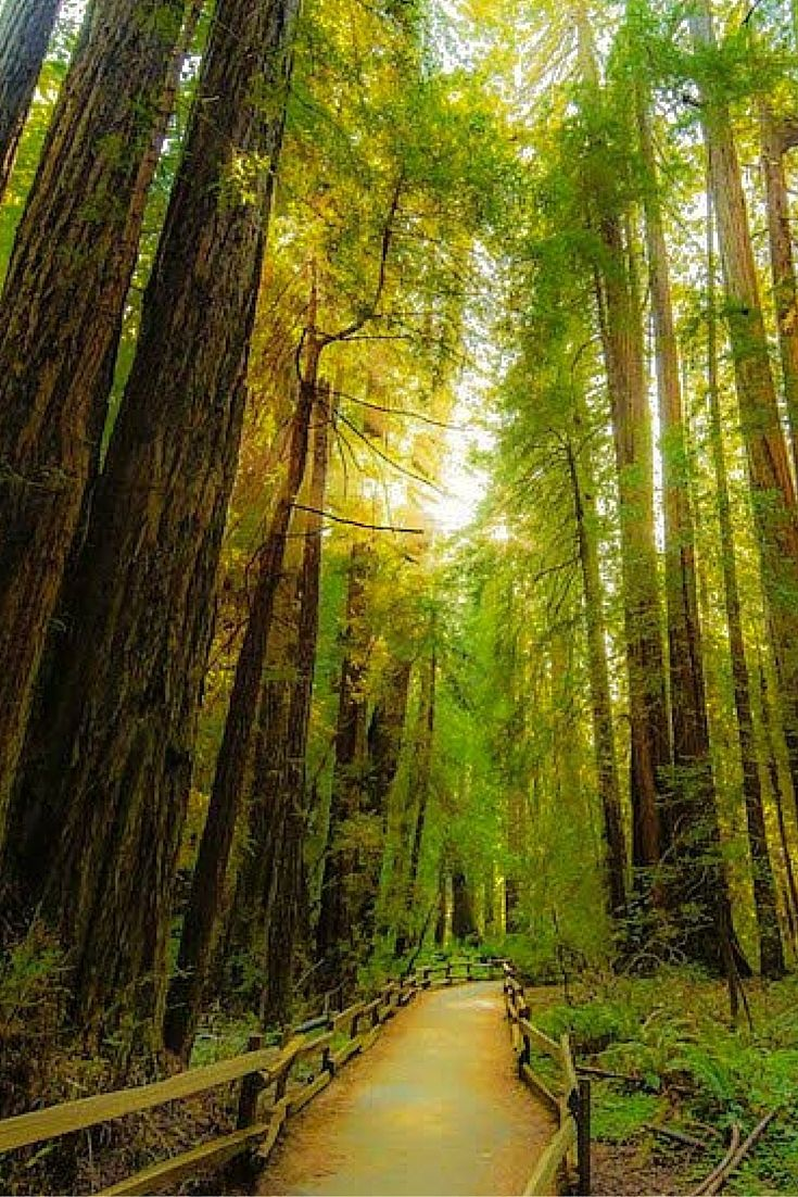 Muir Woods, San Francisco Bay Area, California