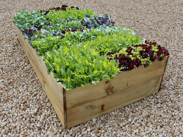 Large raised bed kit, perfect for a school garden. Classic 14in High flatpack Raised Bed kit £49.00
