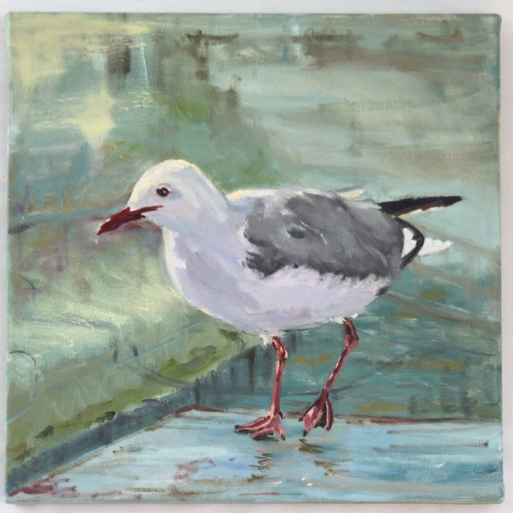 A hopeful gull at the V&A waterfront, Cape Town. 40x40x3