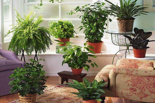 ПОТРЯСАЮЩИЕ УДОБРЕНИЯ ДЛЯ РАСТЕНИЙ!!!Цветы в доме всегда создают комфорт и уют. Если у вас дома много цветов, то вы знаете, что за ними нужен большой уход. И для того, чтобы цветы радовали нас, их над…