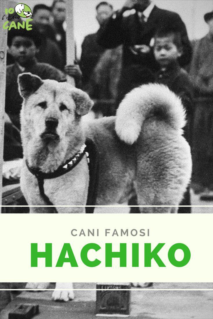 Come divenne famoso Hachiko? cosa sai davvero di lui?