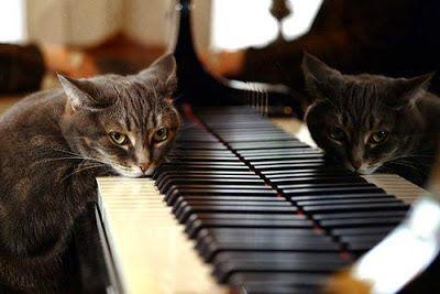 El Blog de DaviD: Gato de Noche...