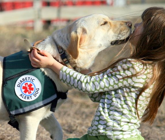 DIABETIC ALERT DOG - November is National Diabetes Month and I wanted to take this opportunity to raise public awareness