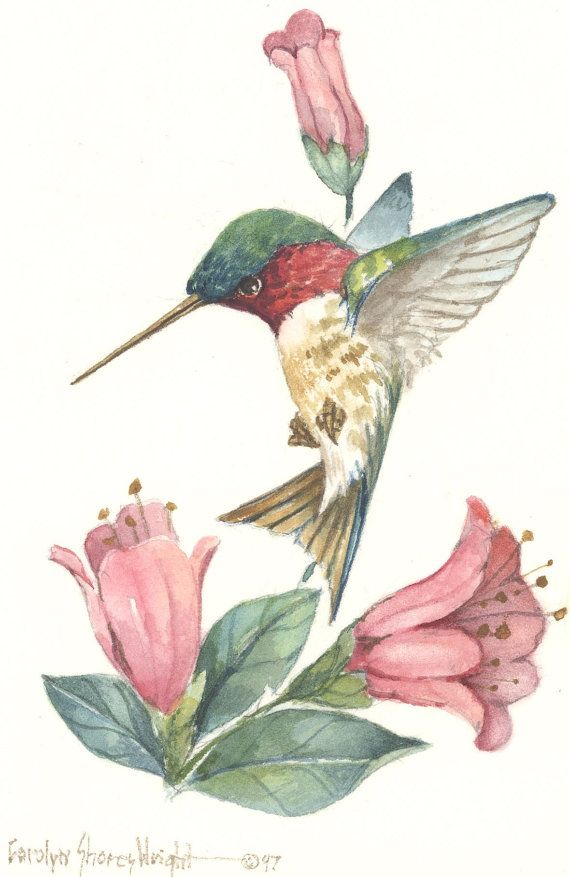 A 7 x 5 lithograph from an original watercolor by Carolyn Shores Wright. This item is one of many hummingbird and flower combinations she has painted.