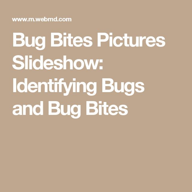 Bug Bites Pictures Slideshow: Identifying Bugs and Bug Bites