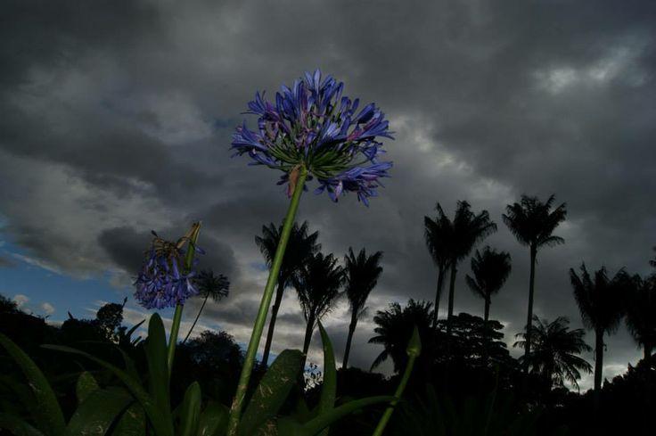 una flor en la oscuridad.