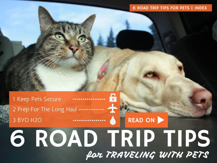 Goin' for a road trip this weekend? Bring your pets along!  Just follow these 6 Road Trip Tips For Traveling With Your Pets...