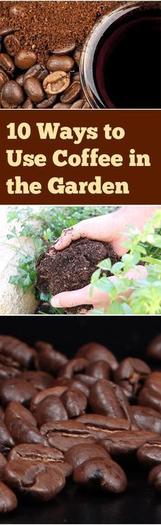 Always looking for more ways to bring coffee into my life. 10 Ways to Use Coffee in the Garden