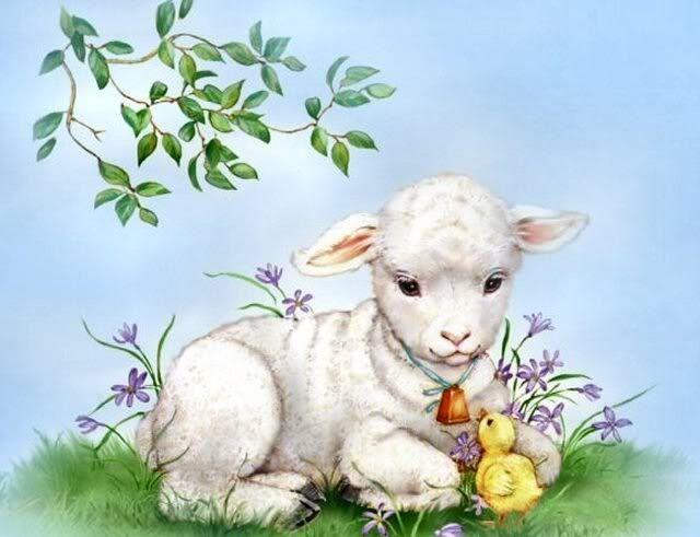 Penny Parker | Penny Parker Images - spring lamb