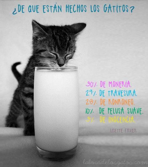 cita-gatos-receta