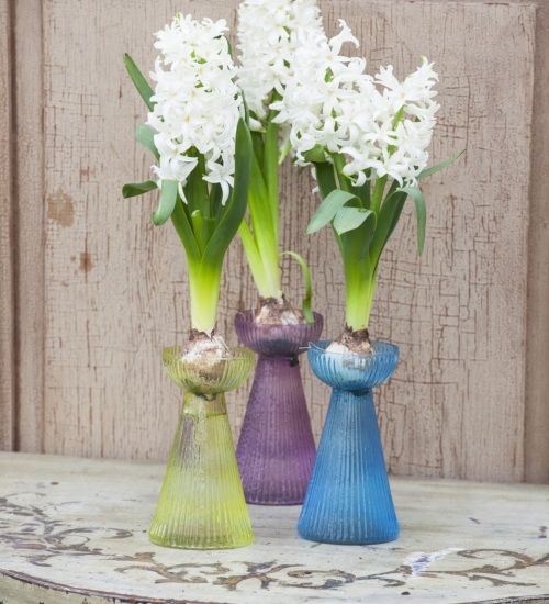vases for forcing keep the bulb out of the water