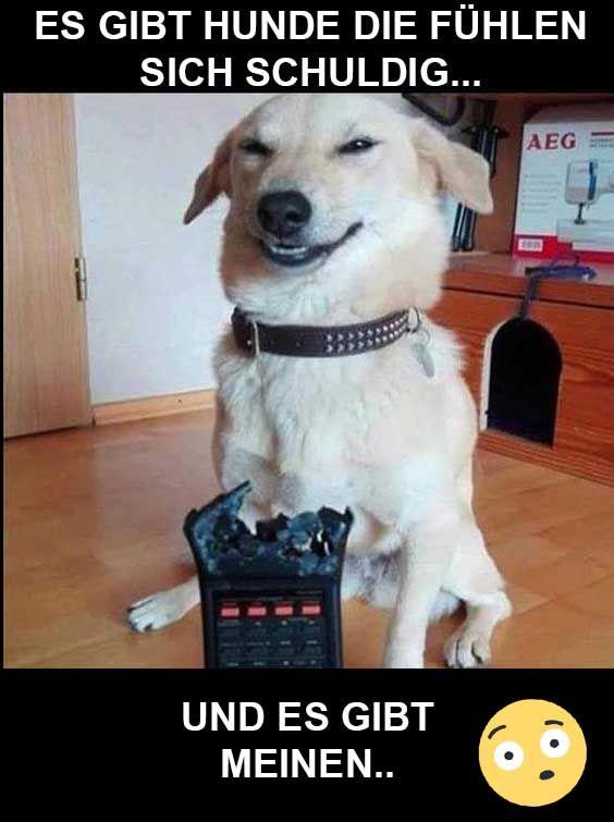 74 besten hunde lustiges lustige hundebilder bilder auf pinterest lustige tiere lustige