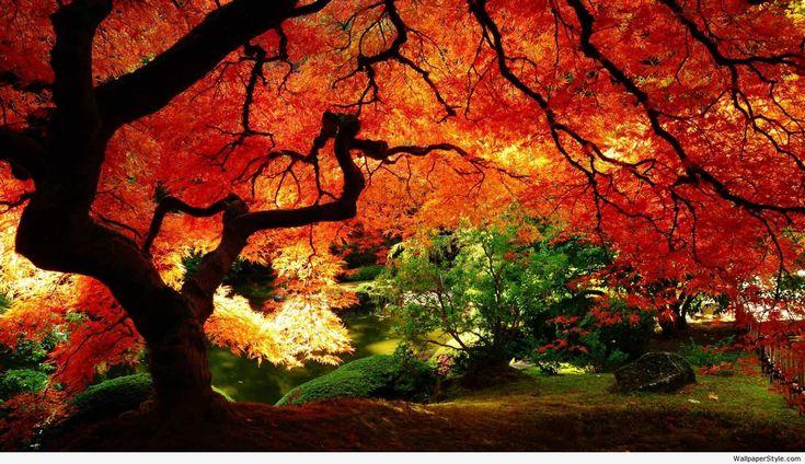 fall desktop backgrounds - http://desktopwallpaper.info/fall-desktop-backgrounds-1058/ #Backgrounds, #Desktop backgrounds, desktop