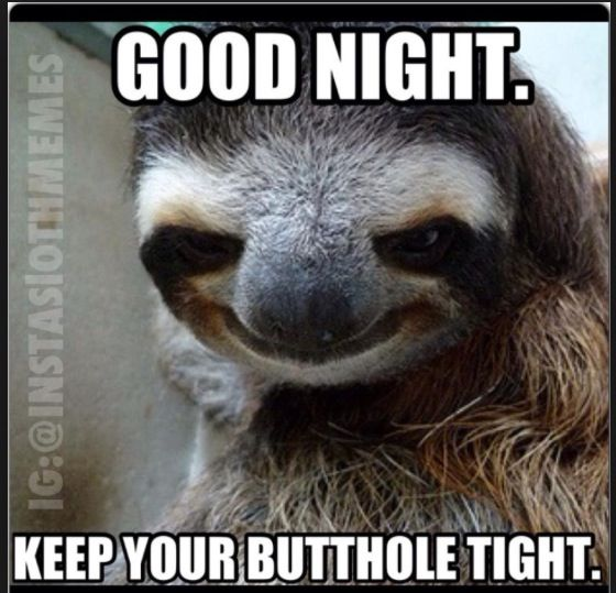 Funny Goodnight Meme For Him : Good night creeper sloth pinterest and