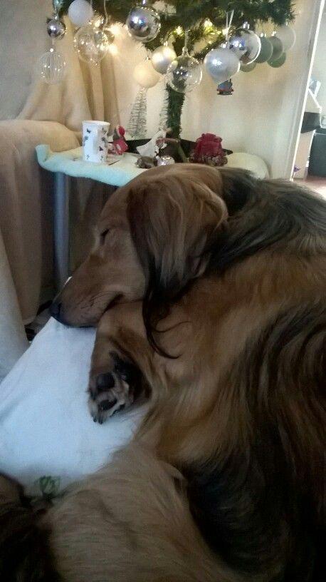 Having a nap#daxie
