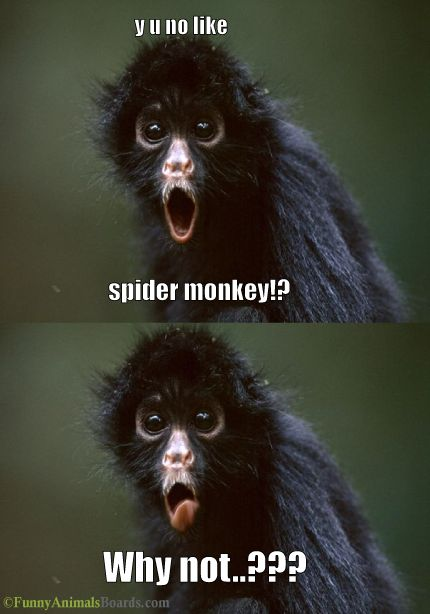 Spider Monkey | The Best Things In Life Are Funny