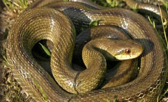 Αυτά είναι τα δηλητηριώδη φίδια της χώρας μας – Τι πρέπει να κάνουμε αν μας δαγκώσουν!  #Υγεία