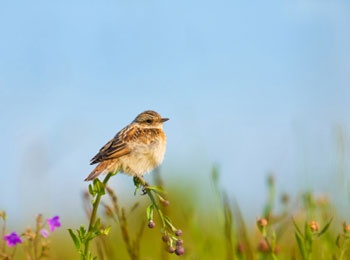 Resultado de imagen de echoes of nature: bird songs / songbirds: field & meadow - over 25 beautiful bird songs