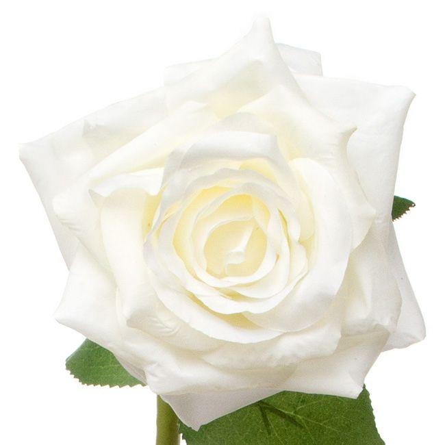 Open Rose White