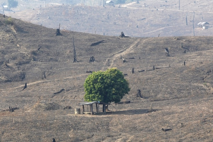 Because of slash and burn practices, one green tree is left amongst hills of burnt out brown and deforested land, near Mae Chaem, northern Thailand.