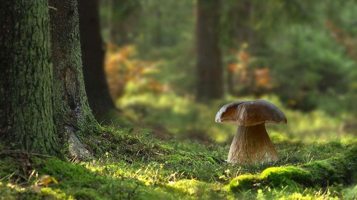Essbare #Pilze: #Natur Pur! Tipps für das Sammeln von Pilzen
