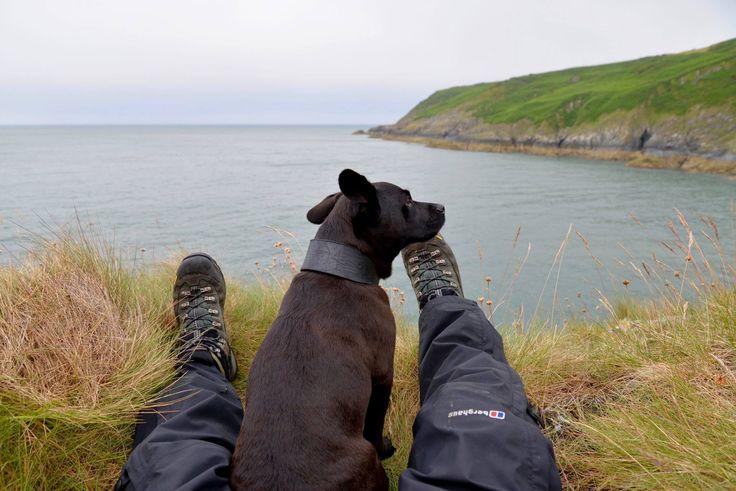 Mans best friend, my legs do meet eventually