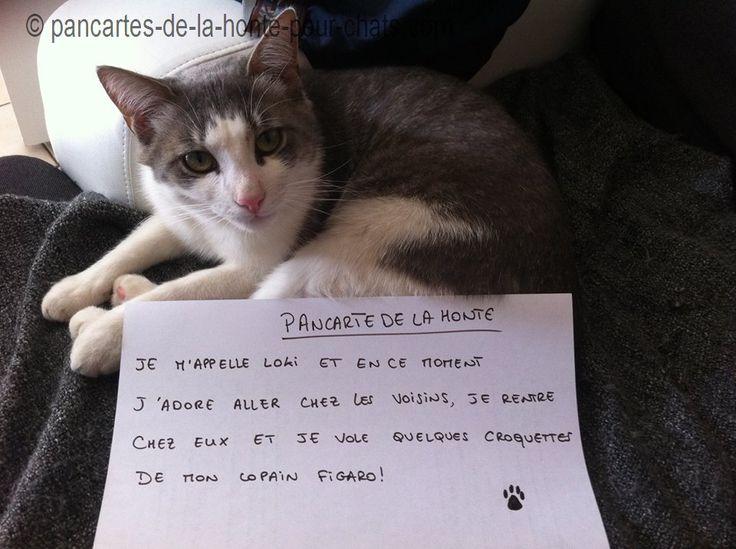 Si les voisins et Figaro ne disent rien, tout va bien