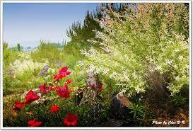 속리산하늘빛식물원 en 보은군, 충청북도 corea del sur