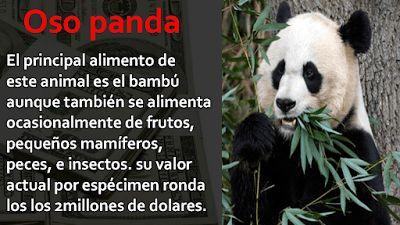 Los animales con mas peso economico - los mas caros del mundo - Imagenes Poemax