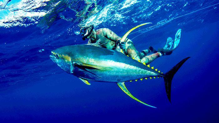Que trajes de neopreno son mejores para la pesca submarina o buceo - Todo para la pesca