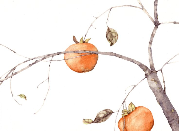 Silvia Molinari Page 4 « » acquerelli
