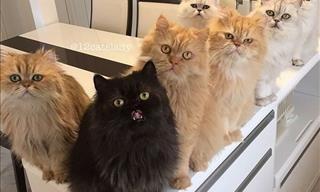 Você conhece alguém que tenha 12 gatos? É incrível como esses felinos super fofos vão encantar o seu dia! Confira!